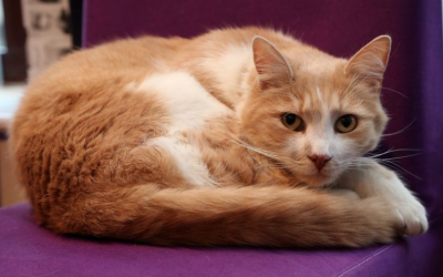 Ruddington cat Wilbur took time out to answer questions about his life – and loves